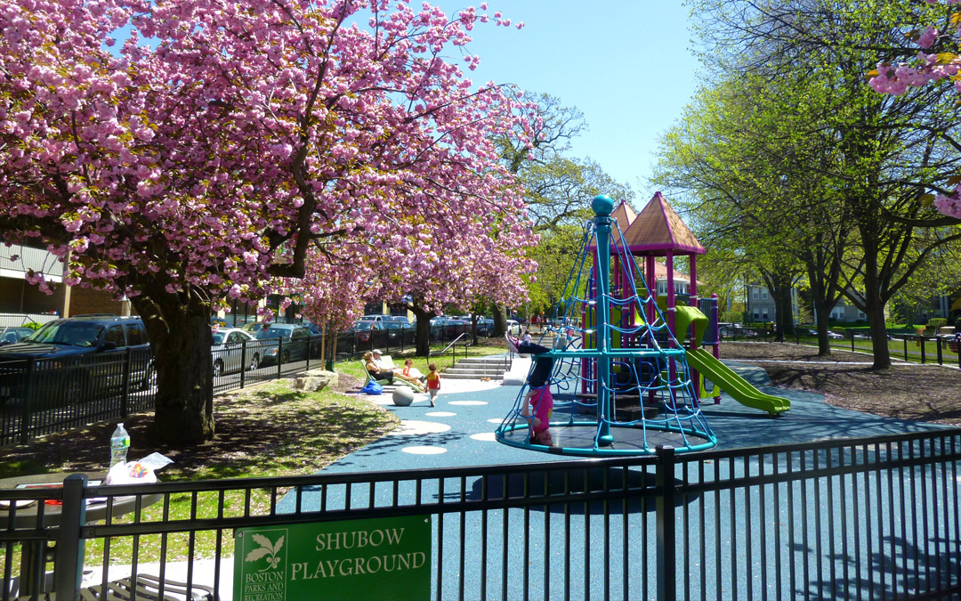 shubow_parks_playgrounds_1_floweringtree